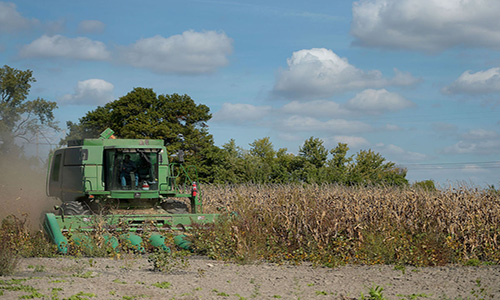 Lawsuits seek loss recovery for corn farmers