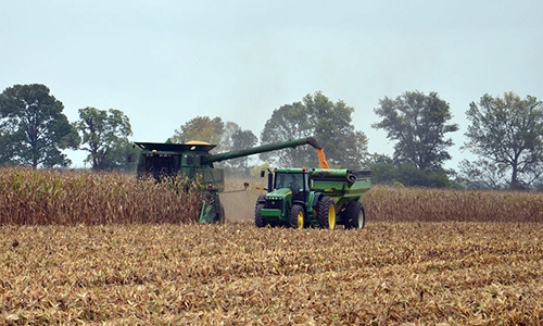 Crop - Corn Harvest