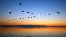Grand River Audubon Society