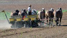 Amish Farmer on Planter
