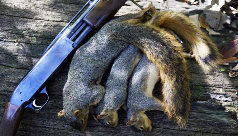 Arkansas 2018 2019 squirrel season