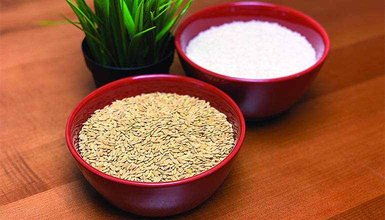 MM17 Rice