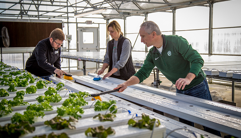 Students and faculty work together at Lettuce Dream in honor of Martin Luther King Jr. day. (Photo by Carly Hostetter | Northwest Missouri State University)