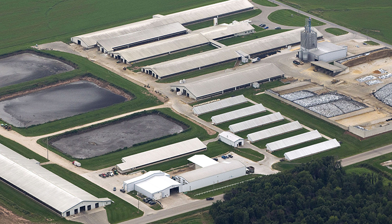 Overhead view of CAFO