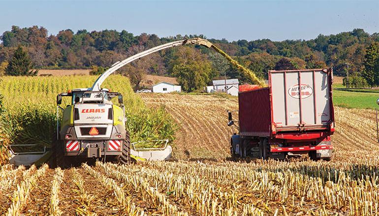 Cutting Corn Silage