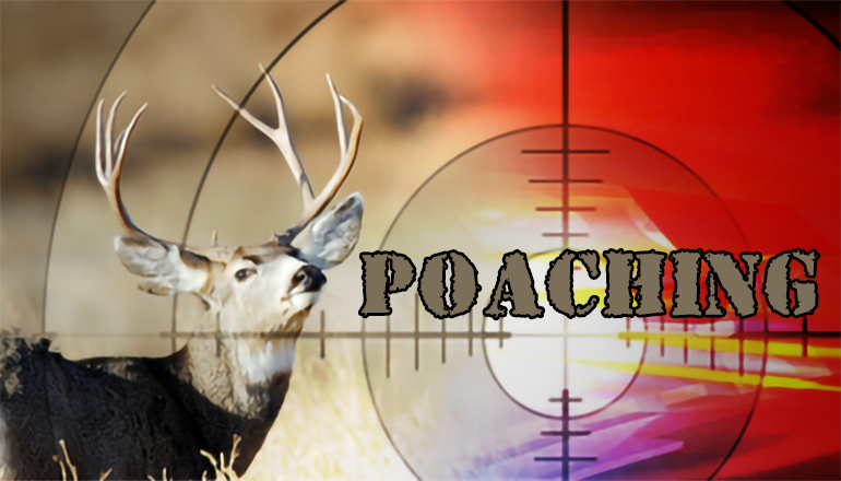 Poaching graphic