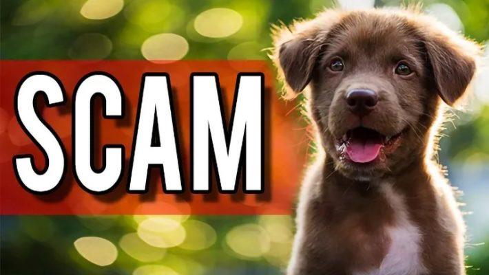 Pet Scam Graphic