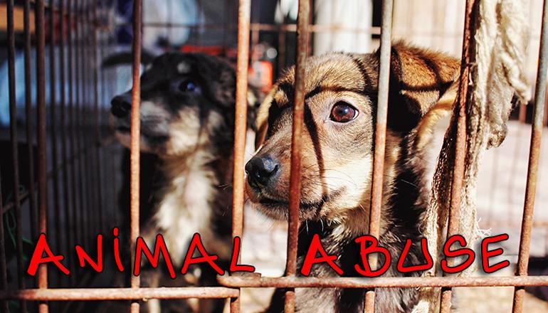 Animal Abuse (dog) Generic