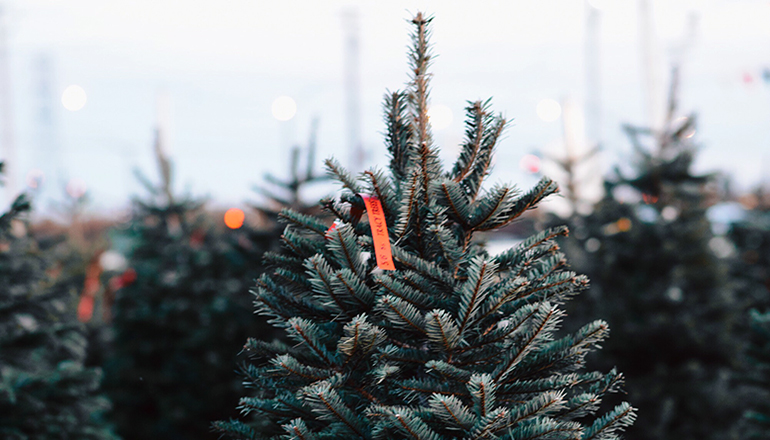 Christmas Tree photo licensed to KTTN via Envato Elements