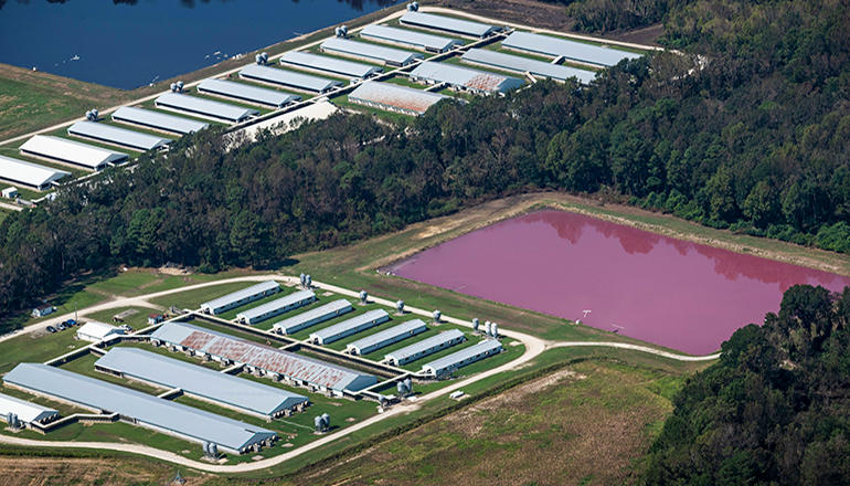 CAFO or Concentrated Animal Feeding Operation