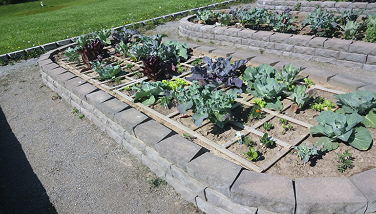 Home Garden Photo Courtesy University Missouri Extension