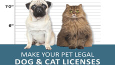 Dog and Cat pet licenses