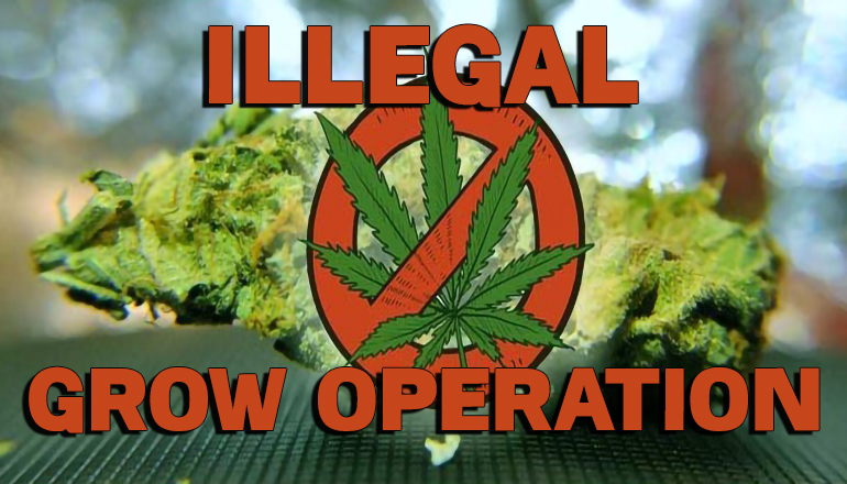 Illegal Grow Operation News Graphic