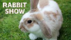 Rabbit Show Graphic