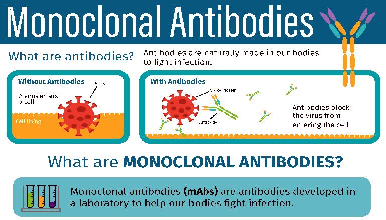 Monoclonal Antibody graphic